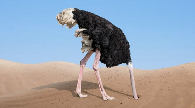 an ostrich with its head in the sand against a blue sky