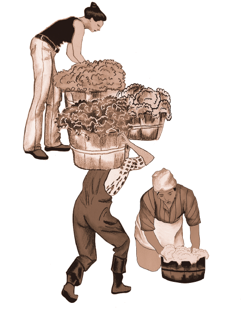 illustration of women and male farmers picking vegetables in a field