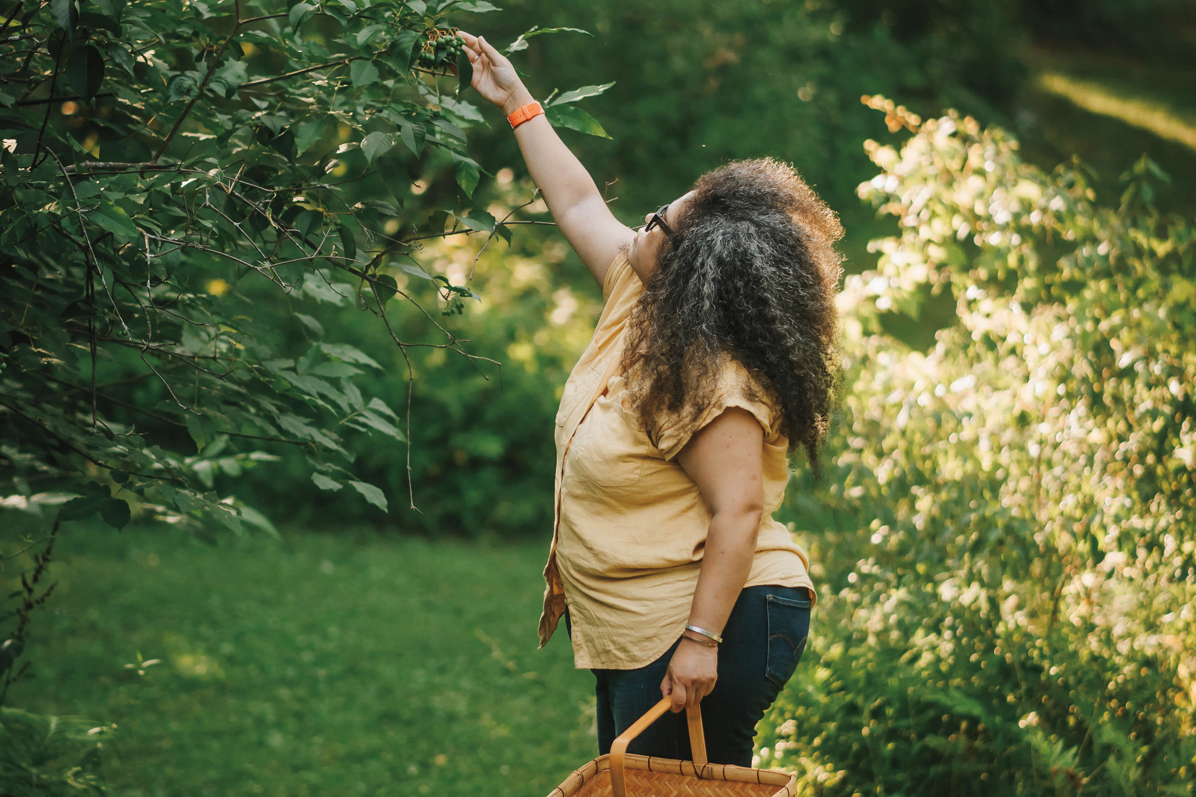 A photo of forager Stephanie Gravalese, an Afro Latina woman with think curly hair wearing a tan button up shirt, jeans and black boots. She's standing in a lush park with a wooden basket and reaching up to inspect berries on a tree.
