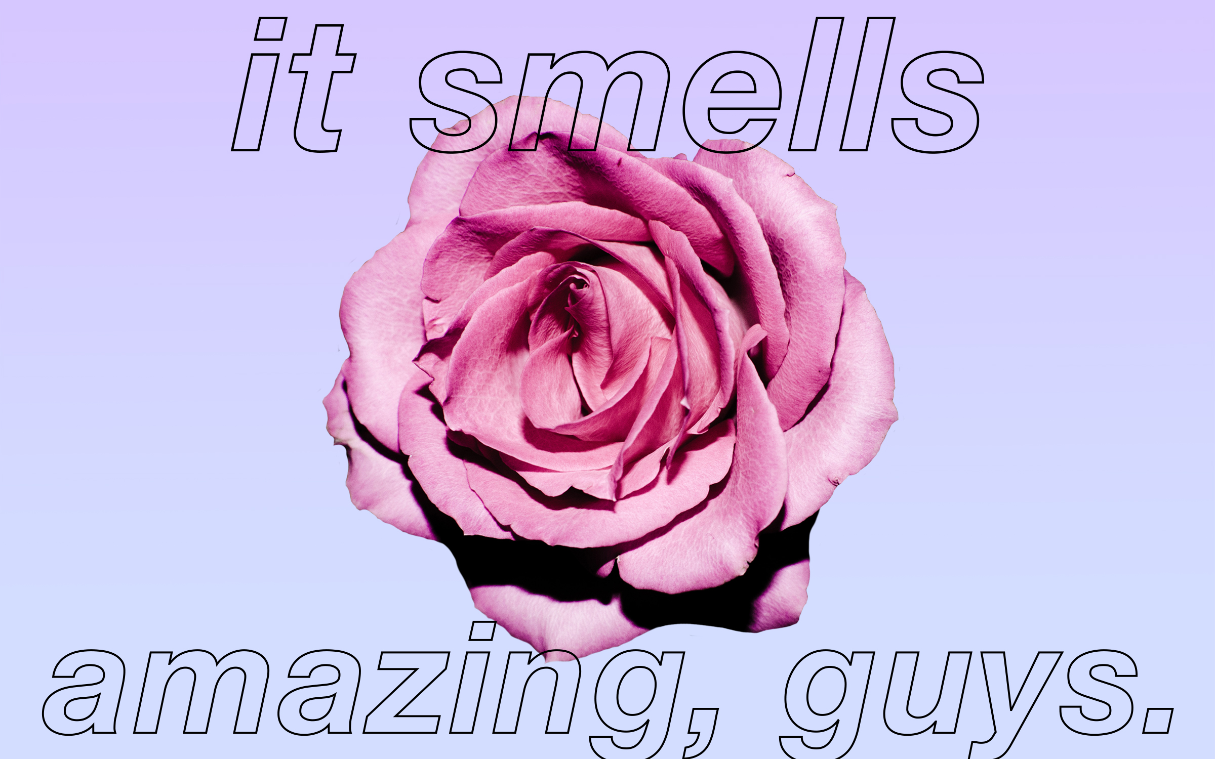 "A rose with the text,""It smells amazing, guys."""