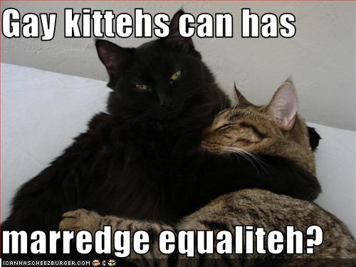 gay_kitties.jpg