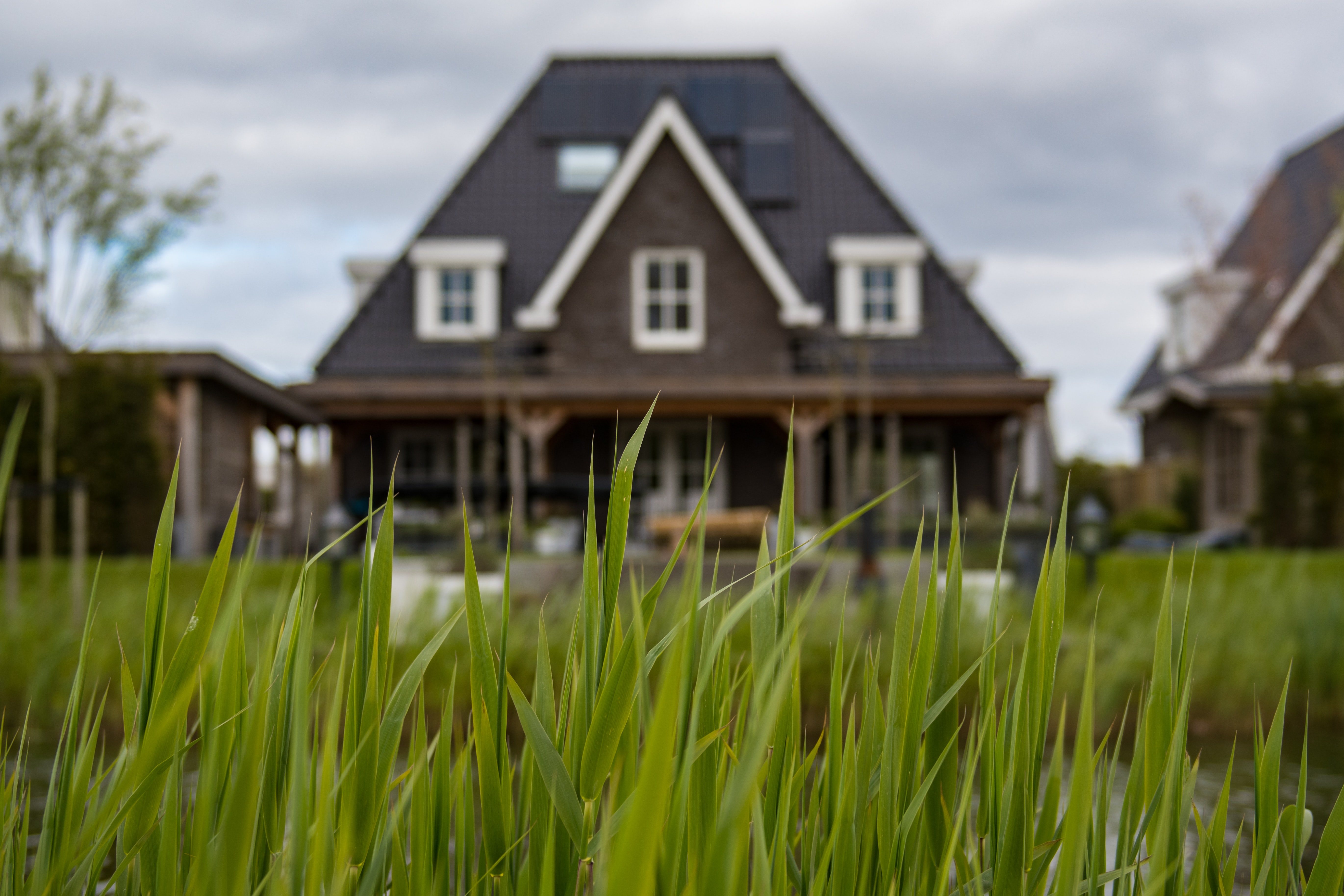 A close up of grass. A house looms behind.