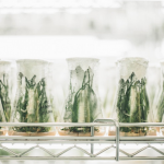 a line of glass beakers with plants inside them