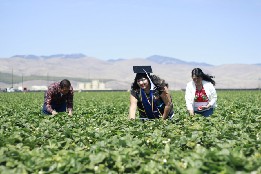 Eunice, wearing her UCLA cap and gown, picks strawberries in a field with her parents.