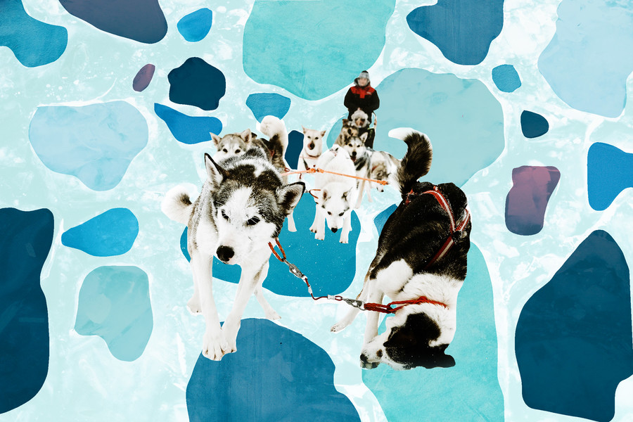 a collage of huskies pulling a woman through snow that is light and navy blue