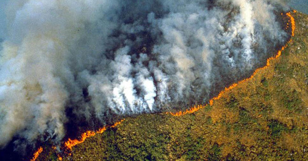On Our Radar: Why the Amazon Rainforest Fires Are Absolutely Devastating