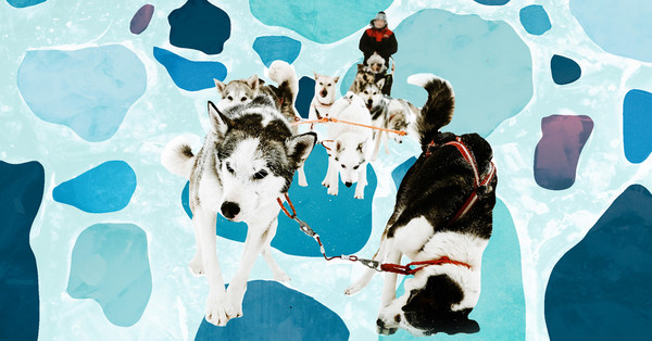 Women and Sled Dogs Are Challenging the Polar Hero Narrative